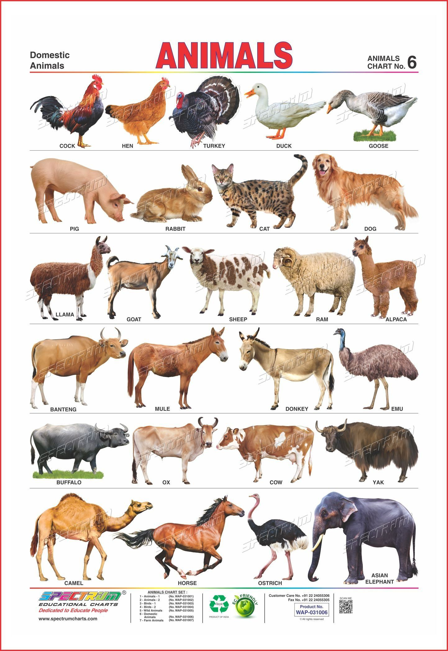 Buy Two In One Educational Wall Chart Domestic Animals