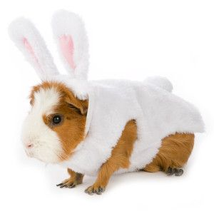 All Living Things Small Pet Bunny Spring Petsmart Pet Bunny Small Pet Costumes Small Pets