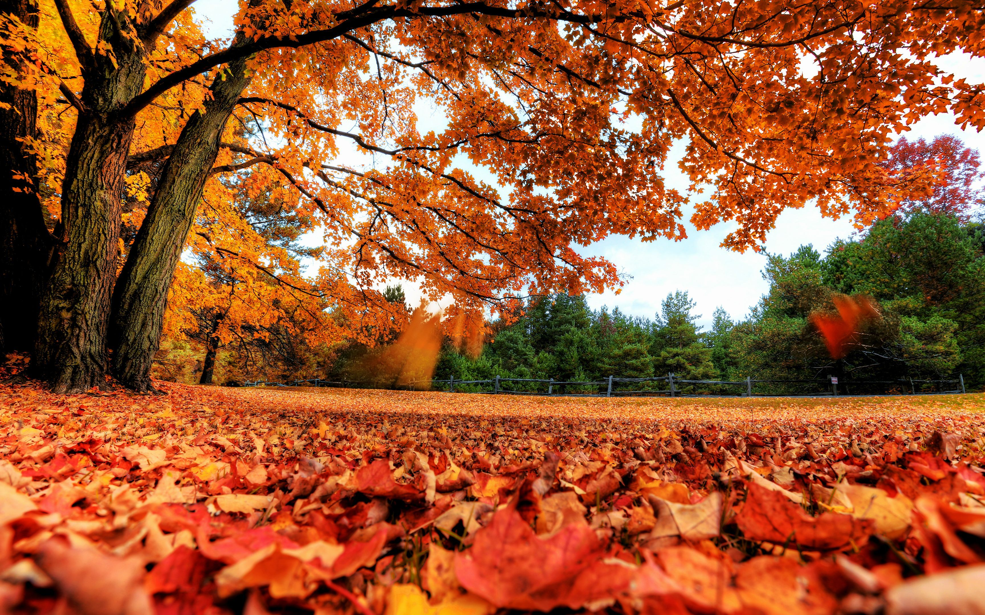 4k Computer In 2020 Autumn Leaves Wallpaper Fall Wallpaper Autumn Scenery