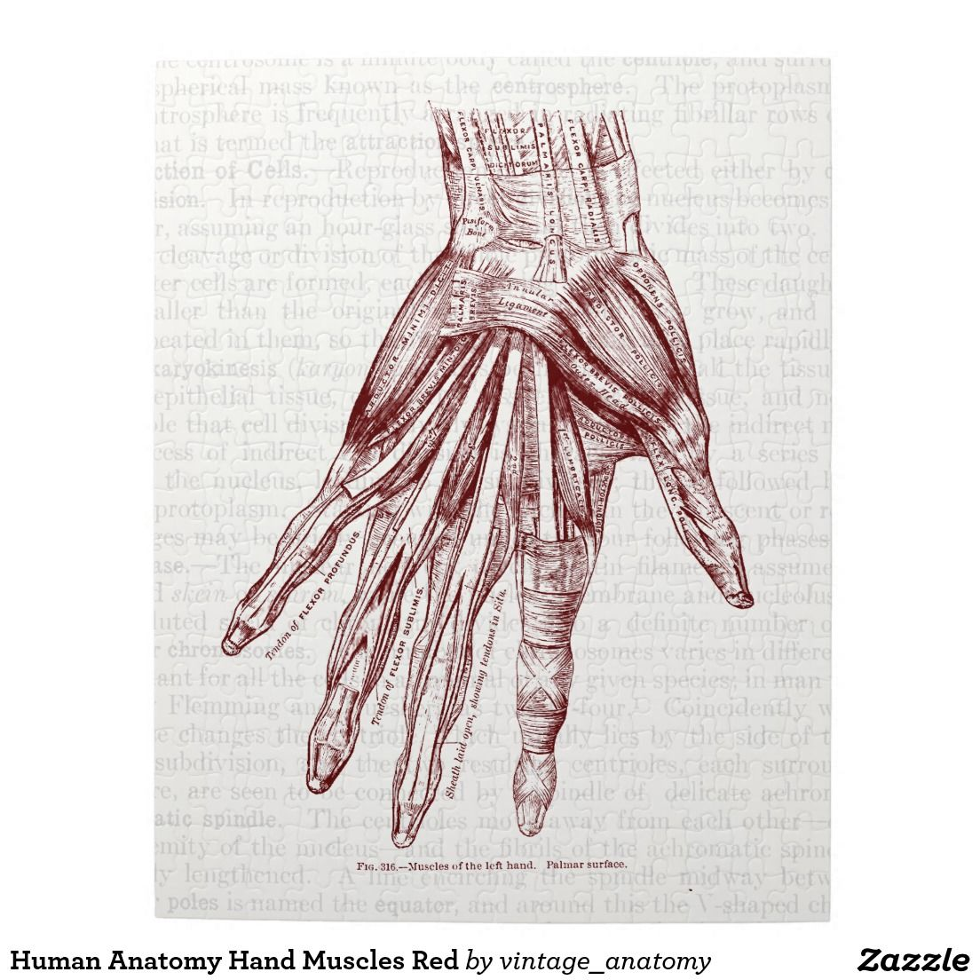 Human Anatomy Hand Muscles Red Jigsaw Puzzle | Jigsaw Puzzles ...