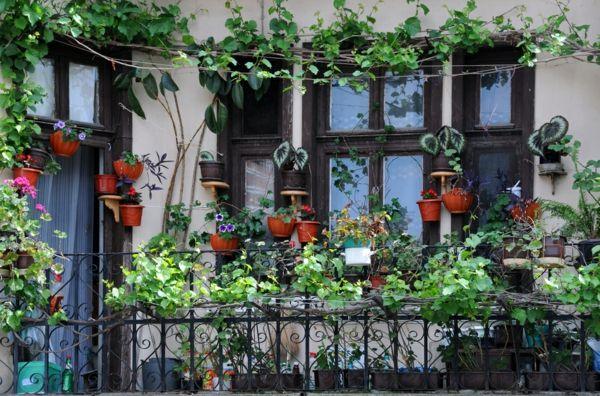 Des Plantes Grimpantes Pour Balcon Et Terrasse On Est Toujours