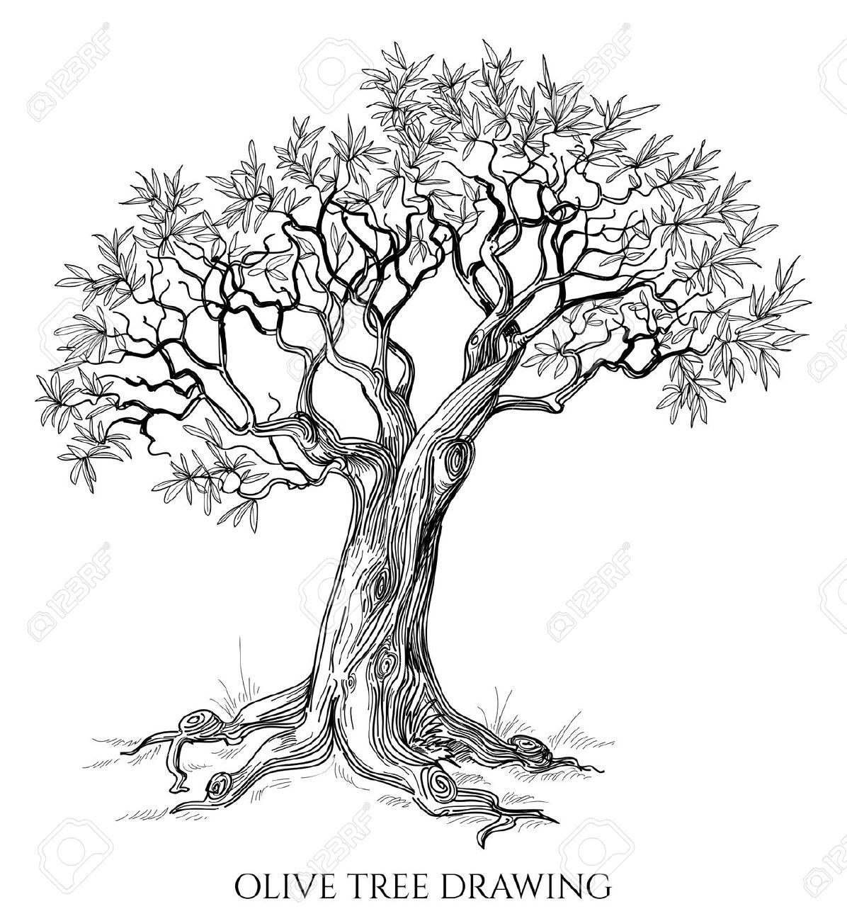 29234205 olive tree isolated hand drawn vector stock vector 1 196 1 300 pikseli. Black Bedroom Furniture Sets. Home Design Ideas