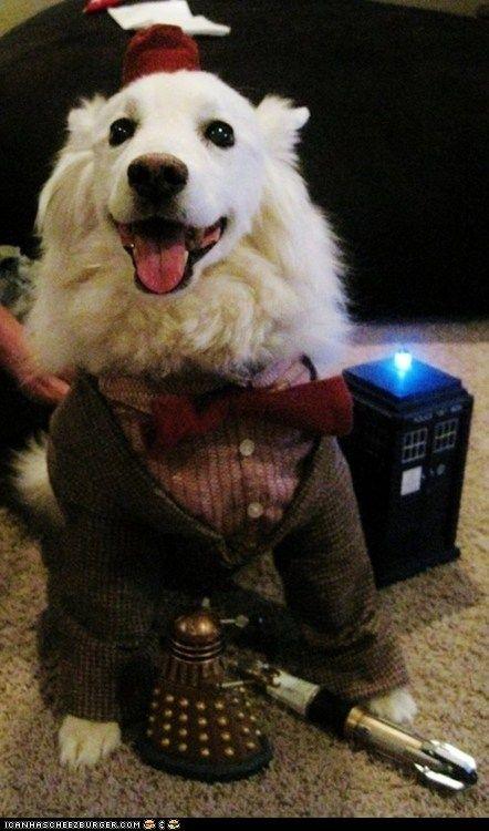 Doctor Who cosplay dog :)