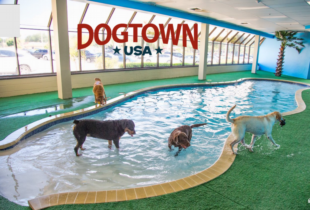 Indoor Dog Pool Google Search Dog Pool Indoor Dog Dogs