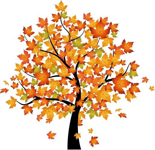 Wandtattoo Home Affaire Baum Im Herbst 120 116 Cm Tree Drawing Tree Sketches Autumn Trees
