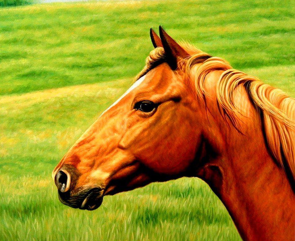 Cabezasdecaballospintadasenoleojpg 940768  caballos