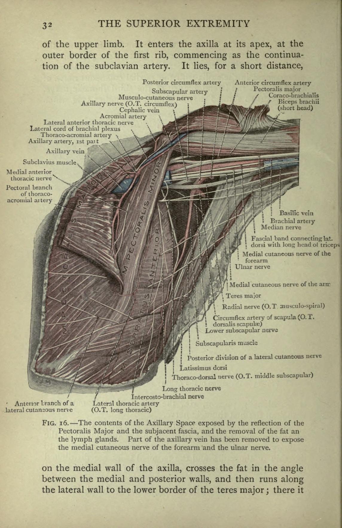 Abdomen Anatomy Archives Manual Guide