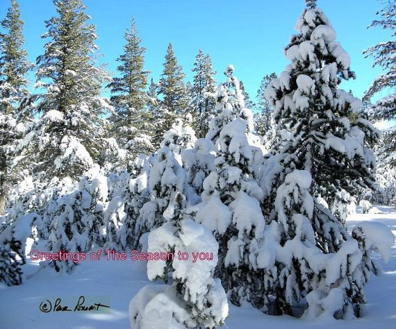 "Please Note:  The watermark will not appear on any product you purchase. This All-Faith Holiday Card bears the message (printed in red in lower left): ""Greetings of the Sea... #photogifts #dailyetsysales #pamsfabphotos #epsteam"