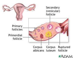 clomid ovarian cyst
