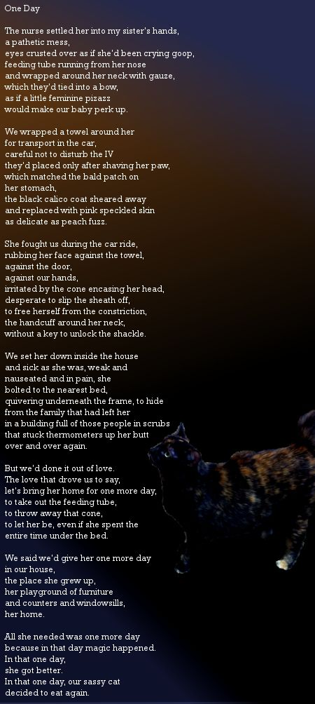 One Day A Poem About Giving A Kitty One Last Chance And Having Miracles Happen Day One Day One Last Chance