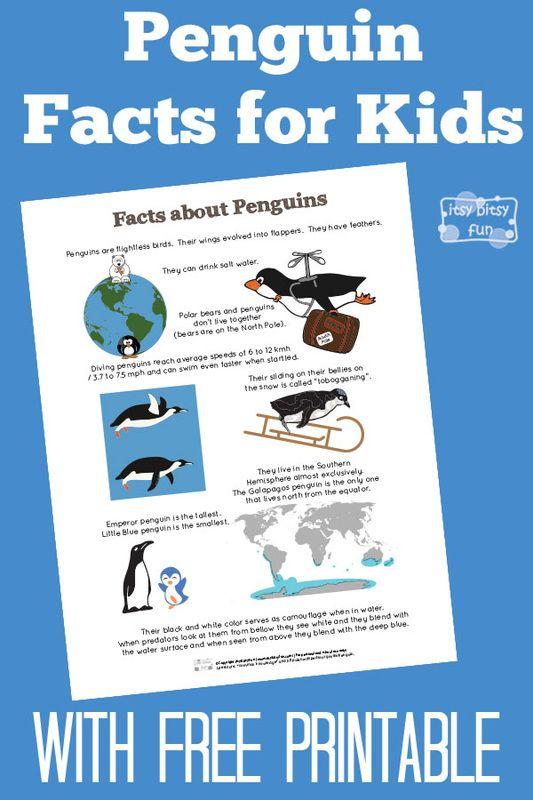 Penguin Facts for Kids - itsybitsyfun.com