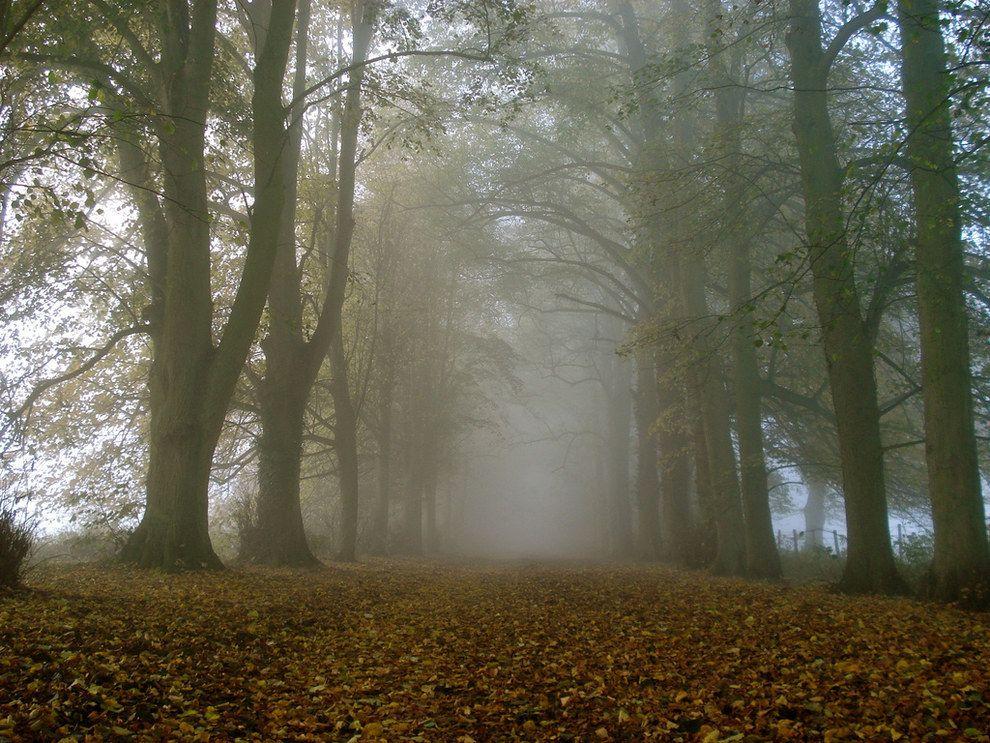 The splendid Shotover Country Park, Oxford