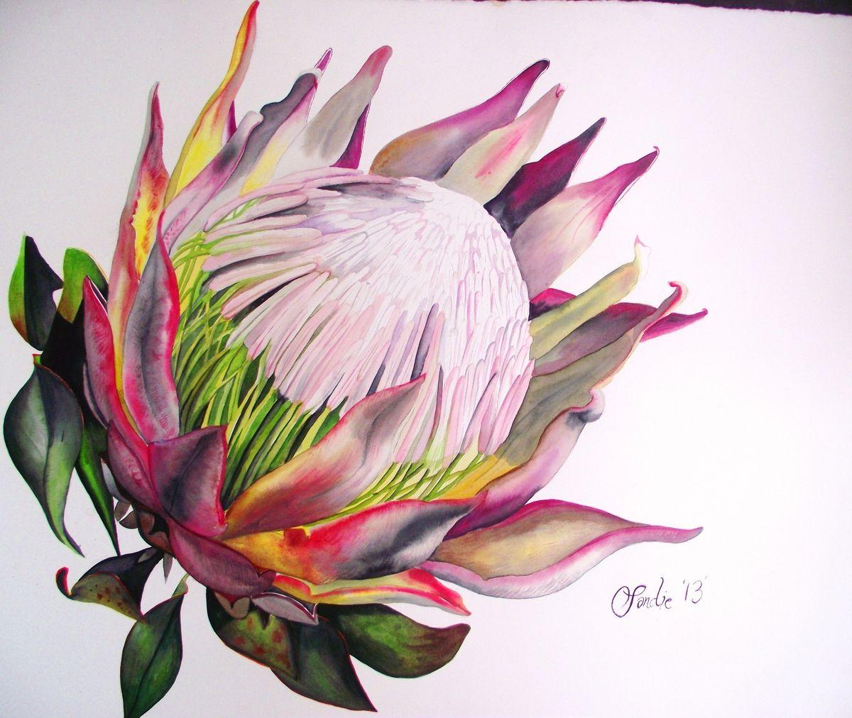 Protea Sandie Copland Portfolio The Loop Protea Art Botanical Painting Flower Painting