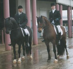 North Forks Black Earl and North Forks Cardi doing it at the Albany Horse fair.