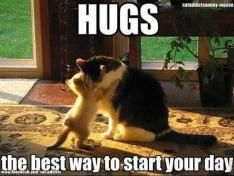 Timeline Photos C A A Cat Addicts Anony Mouse Facebook