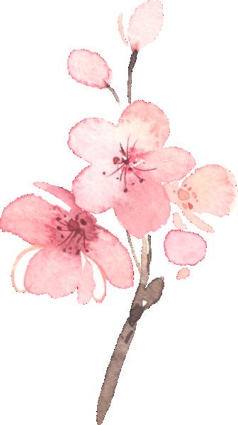 Cherry Blossom Pink Floral Wedding Reception Enclosure Card Zazzle Com Cherry Blossom Painting Cherry Blossom Watercolor Blossoms Art