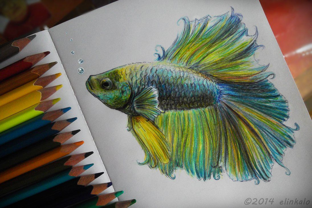 Beta Fish with colored pencils. Pencil for 5 hours. | Art ...