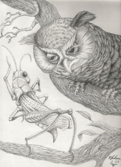 Grasshopper and the Owl from Aesop's Fables ...  artwork by Kelly Jackson