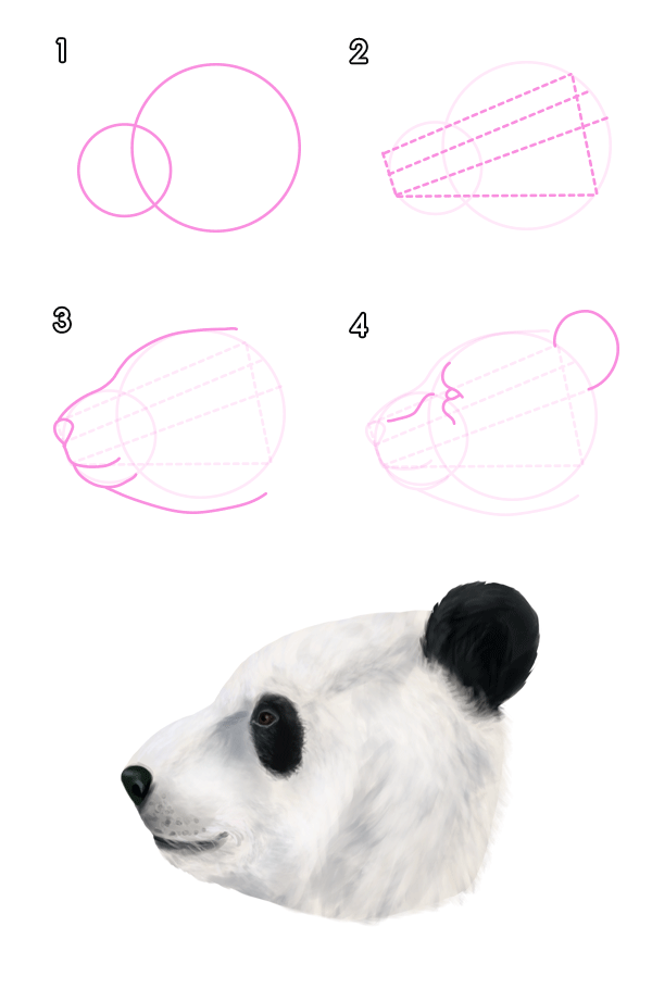 howtodrawbears-3-4-giant-panda-head