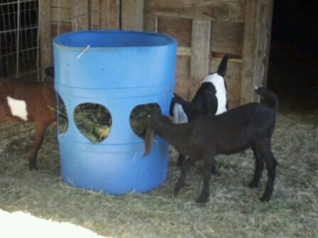16+ Homemade hay feeders for goats ideas in 2021
