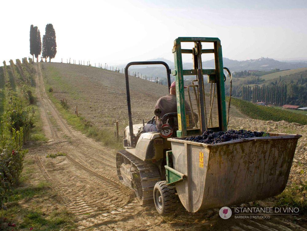 Istantanee di Vino 2012 - Barbera d'Asti DOCG, Consorzio Tutela Vini d'Asti e del Monferrato - Credits Dalila Romeo