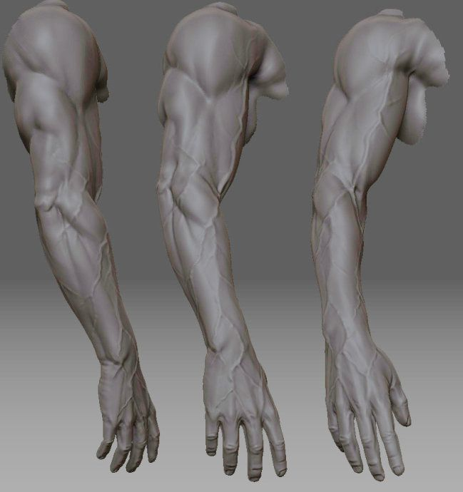 Examples of veins in the arms. #anatomy | 3D Artworks | Pinterest ...