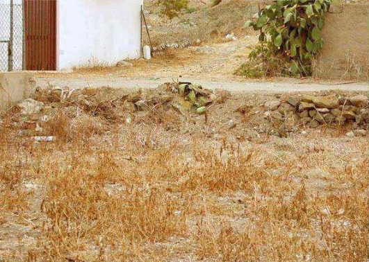 There is a cat here- find it!