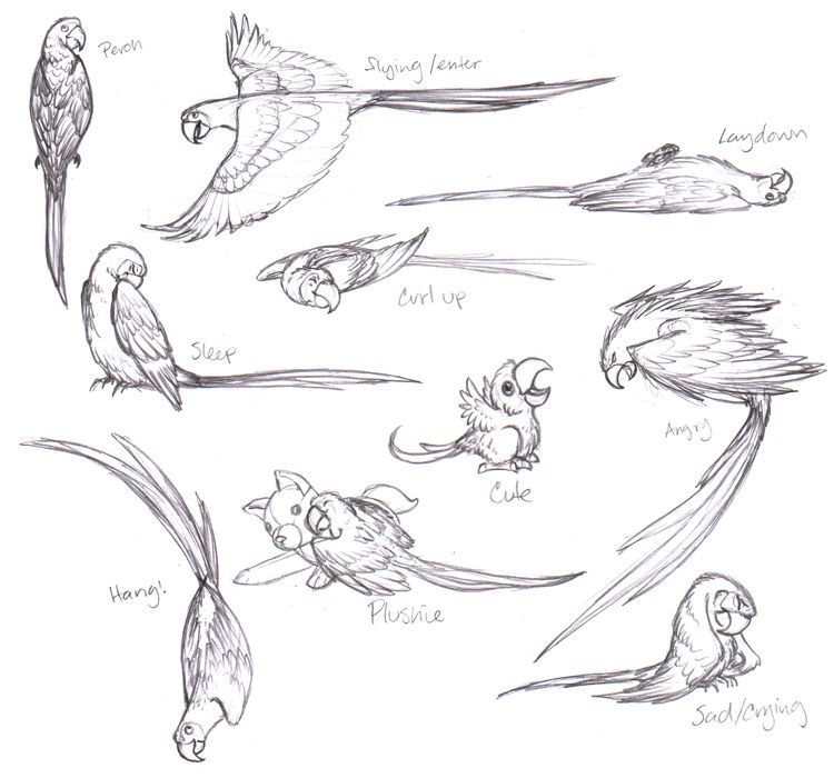 macaw sketches - tattoo ideas