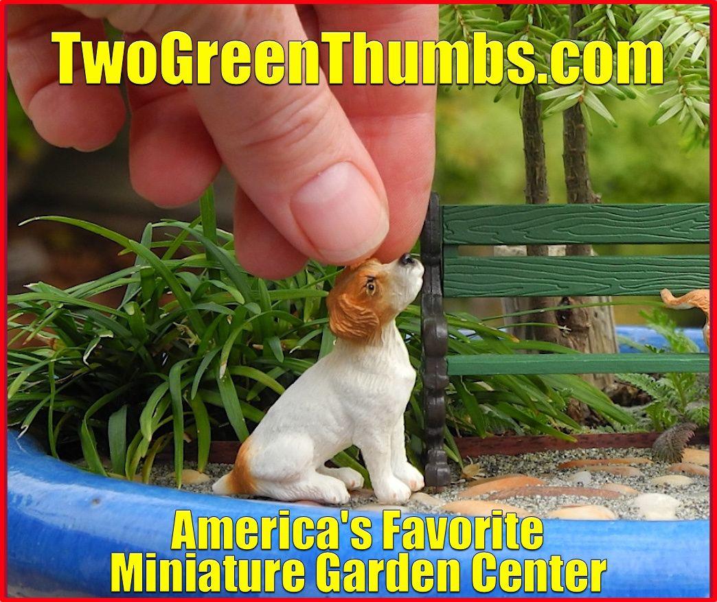 Your Miniature Garden Center