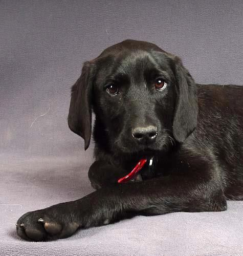 We Re So Proud Of Brutus Here At National Mill Dog Rescue He S A Quot Neodoodle Quot Puppy Neopolitan