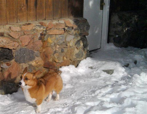 A Welsh Corgi Dog Ole Showed Up At The Hotel Where His Owner And