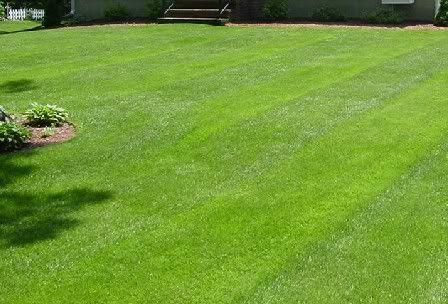 Homemade Lawn Fertilizer Recipe Lawn Fertilizer Pergola