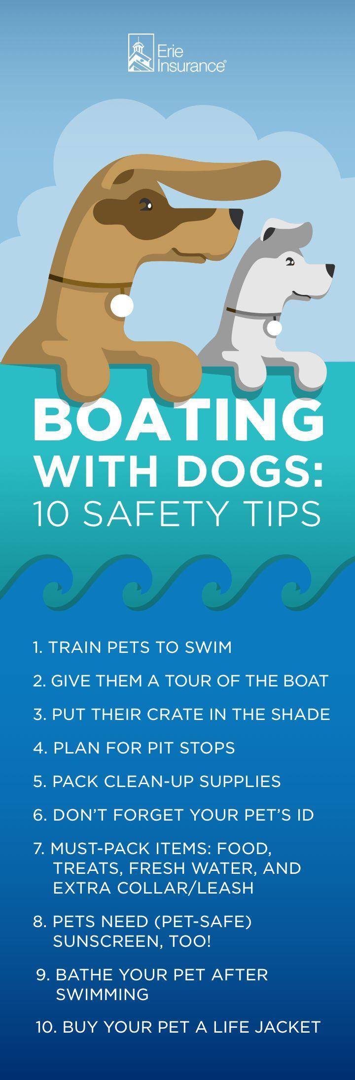 Boating with Dogs Expert Shares Top 10 Water Safety Tips