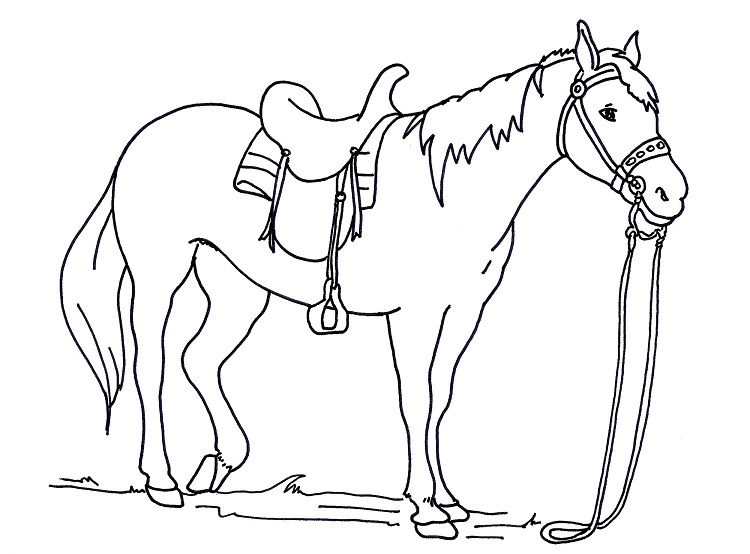 Horse Saddle Coloring Pages Animal Coloring Pages Horse Coloring