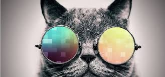 Image Result For Cat Wallpapers For Chromebook Cat Wallpaper Cats Mirrored Sunglasses Men