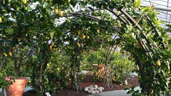 Hesperidarium The Citrus Garden   The First Botanical Garden Dedicated To  Ornamental Citrus Plants
