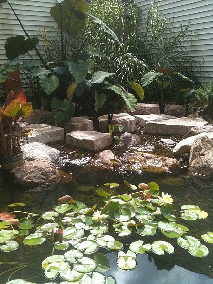 Aquascape Ecosystem Ponds, Water Gardens, Landscape Pond, Fish, Koi Pond, Des Moines, Iowa, just add water, 515 208 4099 is part of garden Pool Ecosystem - Aquascape Ecosystem Ponds, Water Gardens, Landscape Pond, Fish, Koi Pond, Des Moines, Iowa, just add water, 515 208 4099