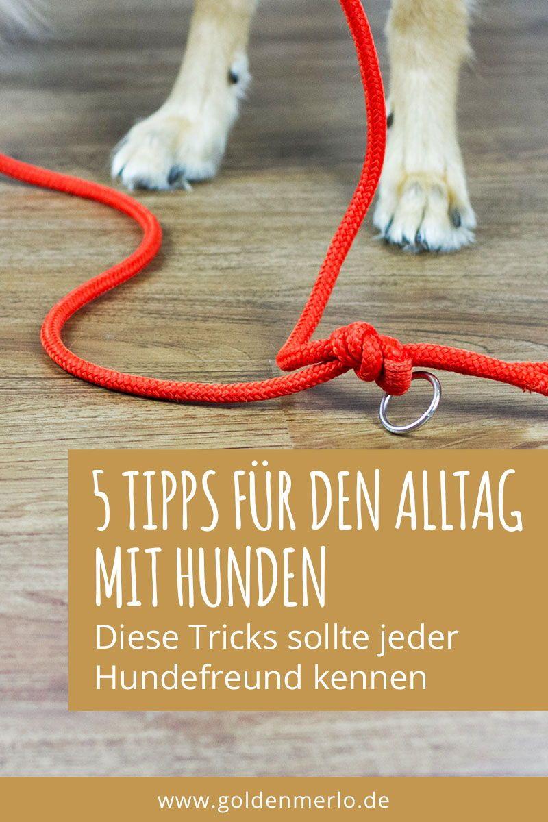 Photo of 5 consejos y trucos para amantes de los perros