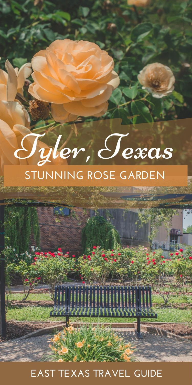 A Guide To Visiting The Tyler Rose Garden Best Beaches In Texas Best Roses Texas Travel Guide