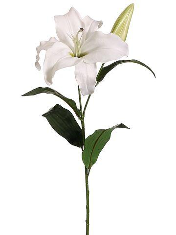 33 Casablanca Lily In White