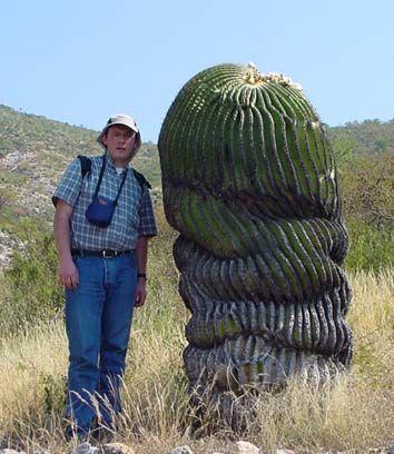 súlycsökkentő gyógynövények chilei oaxaqueno