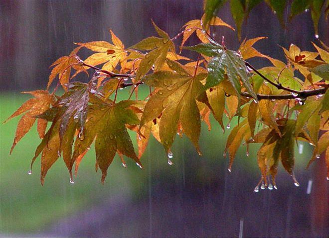 Прогноз погоды на 10 октября: дожди пройдут лишь на севере и северо-западе Казахстана
