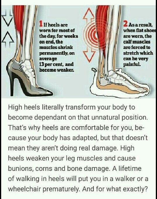 Pin By 88lemonface On Human Biology Anatomy And Physiology
