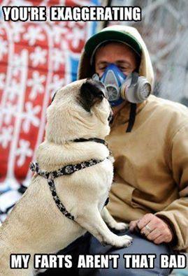 Gas Mask Pug Memes Pugs Funny Funny Dogs