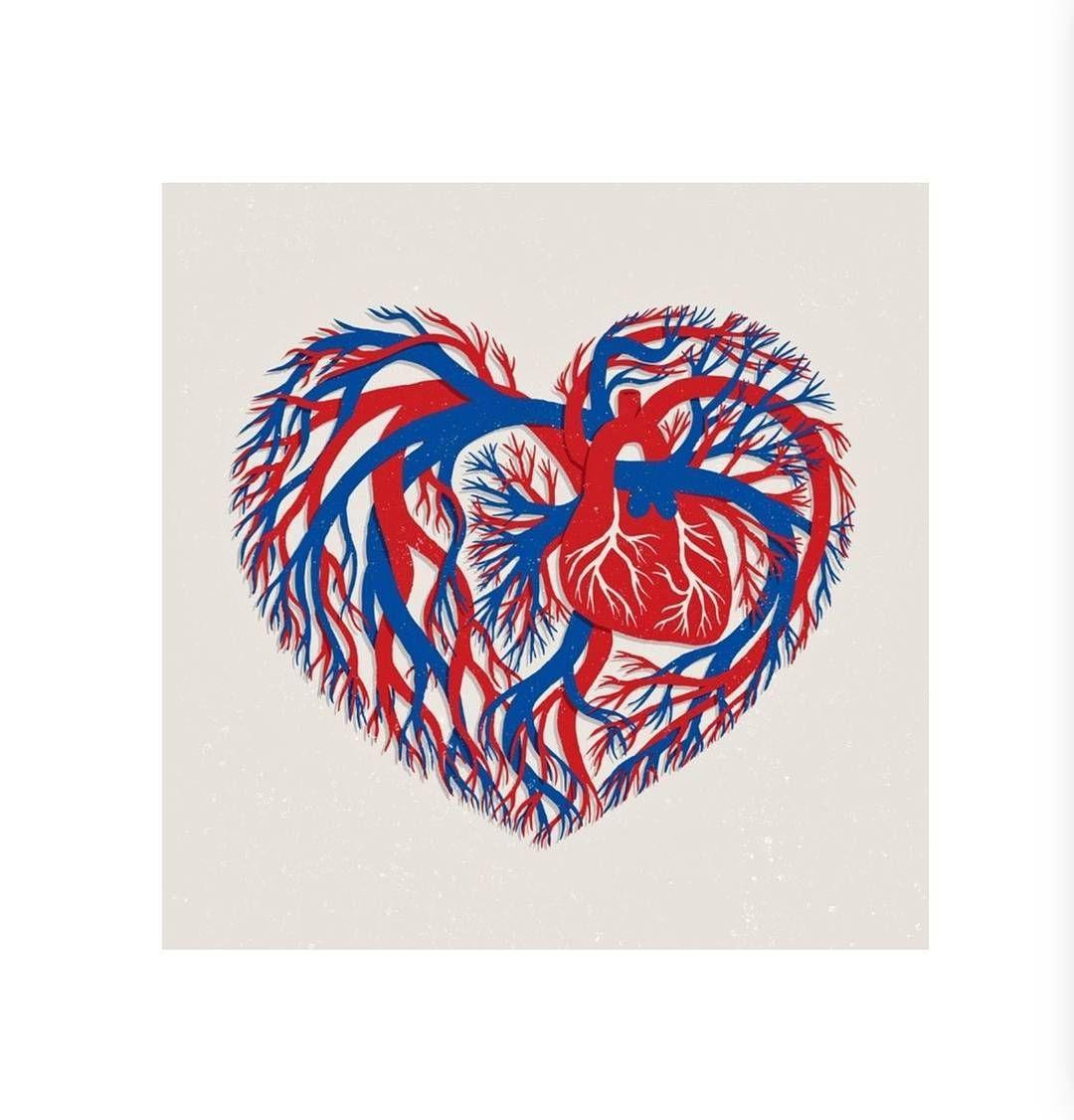 El corazón en realidad continúa por todo el cuerpo en arterias y ...