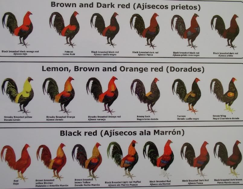 Pin by Sparky Crows on Breeding Project - Pirate Eggs