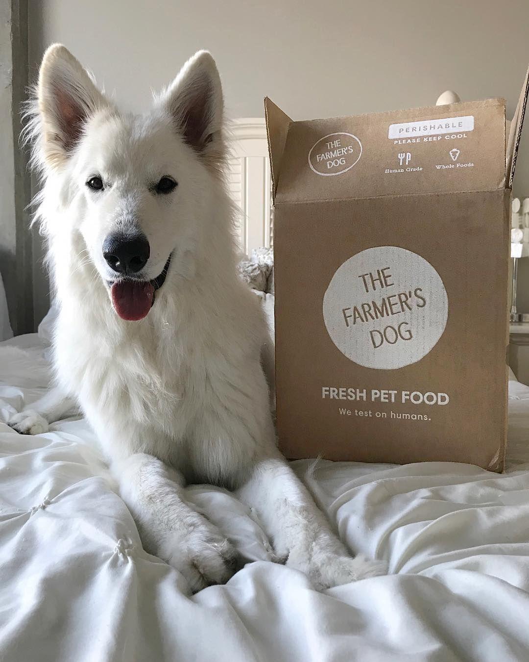 Dog Food For Huskies Dog Food Recipes Food Animals Homemade Dog