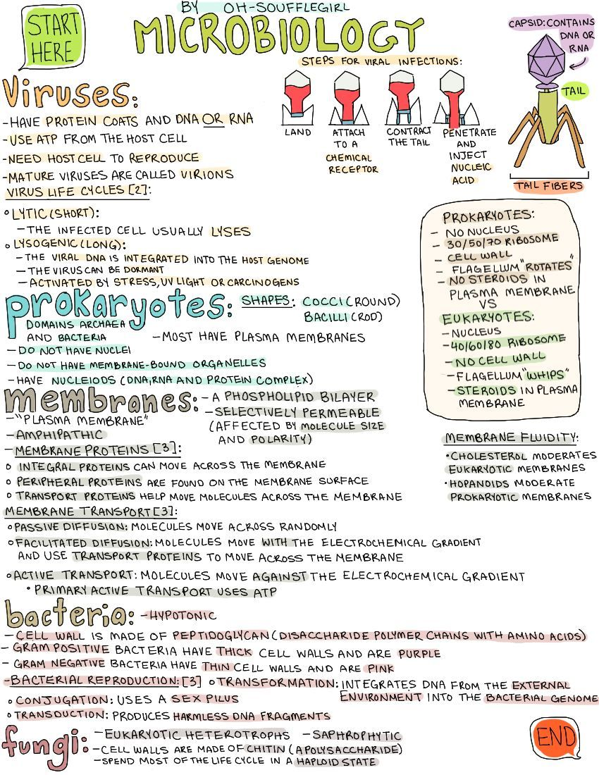 oh soufflegirl hey everyone here x is my microbiology note rh pinterest com Microbiology Cartoons Microbiology Study Guide Drawing
