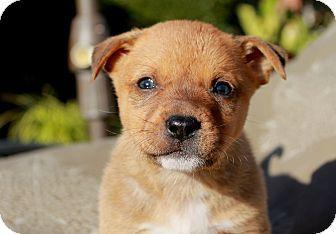 Pin By Summer1967 On Ca Adoptable Animals Golden Retriever Mix Pet Adoption Pets