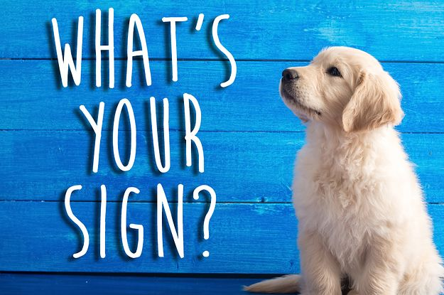 What Kind Of Dog Person Are You Based On Your Zodiac Sign